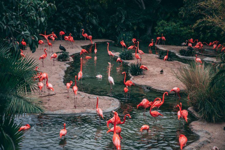 zoo w europie, najlepsze zo