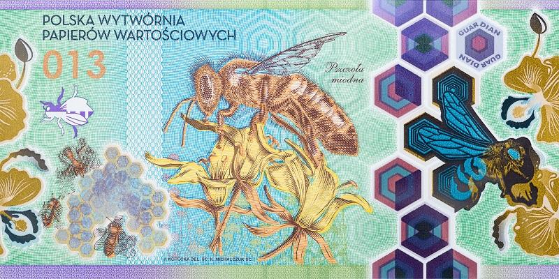 banknot, pszczoła miodna, pieniądz, Ekantor.pl